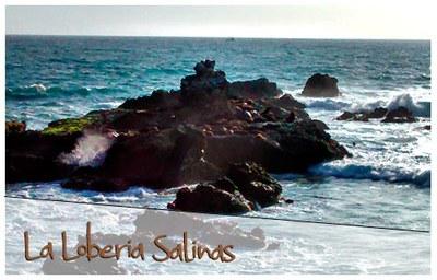 La-Loberia-Salinas.jpg